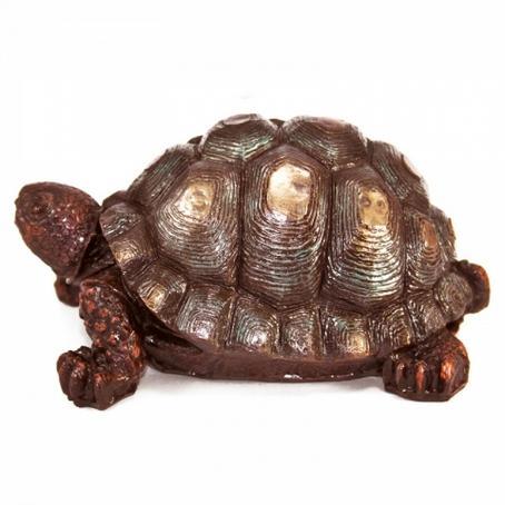 Żółw duży