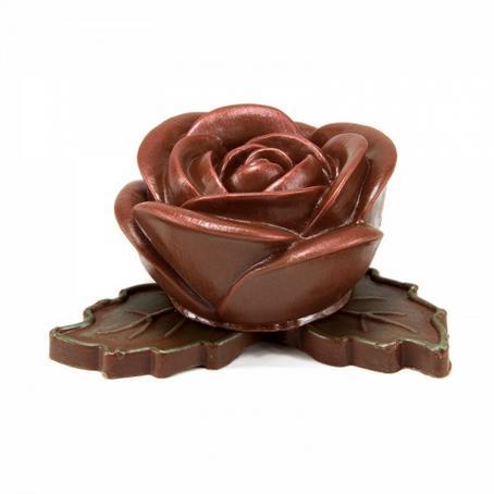 Róża kwiat