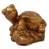 Żółw na skale